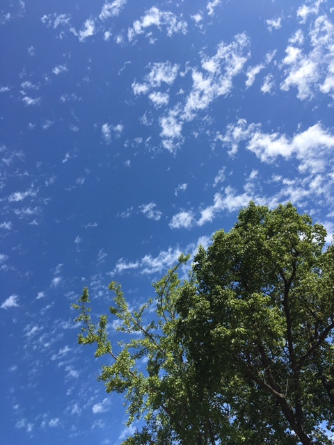秋の青空ヨガ。